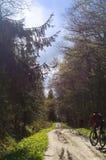 Ciclista, floresta, caminhada, curso, aventura, fuga, saudável, vida, categoria, atividade Fotografia de Stock Royalty Free