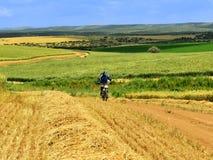 Ciclista nei campi di grano Fotografia Stock