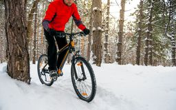 Ciclista no Mountain bike vermelho da equitação no inverno bonito Forest Adventure, no esporte e no conceito do ciclismo de Endur Fotografia de Stock