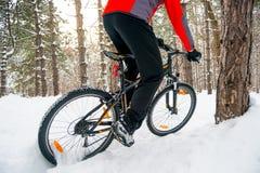 Ciclista no Mountain bike vermelho da equitação no inverno bonito Forest Adventure, no esporte e no conceito do ciclismo de Endur Fotografia de Stock Royalty Free