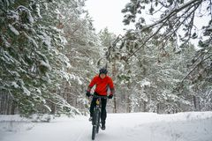 Ciclista no Mountain bike vermelho da equitação no inverno bonito Forest Extreme Sport e no conceito Biking de Enduro Imagem de Stock Royalty Free