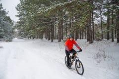 Ciclista no Mountain bike vermelho da equitação no inverno bonito Forest Extreme Sport e no conceito Biking de Enduro Fotografia de Stock Royalty Free