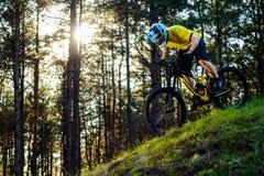 Ciclista profesional en camiseta amarilla y casco que monta la colina de la bici abajo en Forest Extreme Sport Concept Foto de archivo