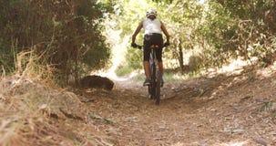 Ciclista que completa un ciclo a través de bosque almacen de metraje de vídeo