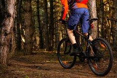 Ciclista que monta a bicicleta na fuga no pinho bonito Forest Healthy Lifestyle e no conceito do esporte Imagem de Stock