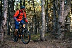 Ciclista que monta a bicicleta na fuga no pinho bonito Forest Healthy Lifestyle e no conceito do esporte Fotografia de Stock Royalty Free