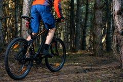 Ciclista que monta a bicicleta na fuga no pinho bonito Forest Healthy Lifestyle e no conceito do esporte Fotos de Stock Royalty Free