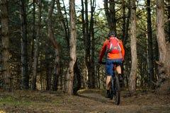 Ciclista que monta a bicicleta na fuga no pinho bonito Forest Healthy Lifestyle e no conceito do esporte Fotos de Stock