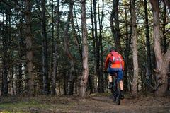 Ciclista que monta a bicicleta na fuga no pinho bonito Forest Healthy Lifestyle e no conceito do esporte Imagens de Stock Royalty Free