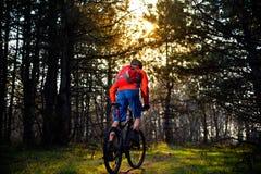 Ciclista que monta la bici en el rastro en el pino de hadas hermoso Forest Adventure y el concepto del viaje Imagenes de archivo