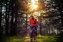 Ciclista que monta la bici en el rastro en el pino de hadas hermoso Forest Adventure y el concepto del viaje Fotografía de archivo libre de regalías