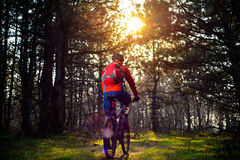Ciclista que monta la bici en el rastro en el pino de hadas hermoso Forest Adventure y el concepto del viaje Fotografía de archivo