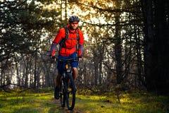 Ciclista que monta la bici en el rastro en el pino de hadas hermoso Forest Adventure y el concepto del viaje Imagen de archivo
