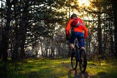 Ciclista que monta la bici en el rastro en el pino de hadas hermoso Forest Adventure y el concepto del viaje Foto de archivo