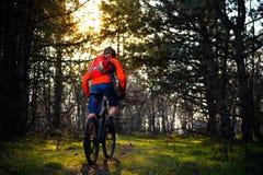 Ciclista que monta la bici en el rastro en el pino de hadas hermoso Forest Adventure y el concepto del viaje Imágenes de archivo libres de regalías