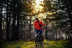 Ciclista que monta la bici en el rastro en el pino de hadas hermoso Forest Adventure y el concepto del viaje Fotos de archivo