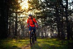Ciclista que monta la bici en el rastro en el pino de hadas hermoso Forest Adventure y el concepto del viaje Fotos de archivo libres de regalías