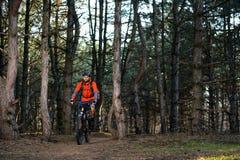 Ciclista que monta la bici en el rastro en el pino hermoso Forest Healthy Lifestyle y el concepto del deporte Fotos de archivo