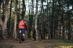 Ciclista que monta la bici en el rastro en el pino hermoso Forest Healthy Lifestyle y el concepto del deporte Fotografía de archivo