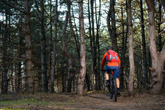Ciclista que monta la bici en el rastro en el pino hermoso Forest Healthy Lifestyle y el concepto del deporte Imágenes de archivo libres de regalías