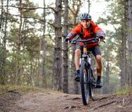 Ciclista que monta la bici en el rastro en Forest Extreme Sport Fotografía de archivo