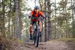 Ciclista que monta la bici en el rastro en Forest Extreme Sport Fotografía de archivo libre de regalías