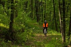 Ciclista que monta la bici en un rastro en bosque del verano Fotografía de archivo libre de regalías