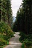 Ciclista sulla strada vuota in foresta verde fotografia stock
