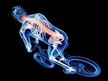 ciclistas ilustração do vetor