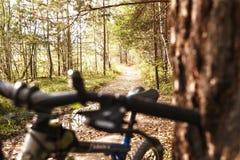 Ciclistas da floresta Imagem de Stock Royalty Free