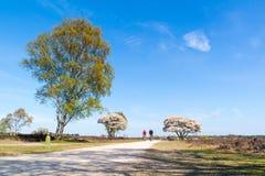 Ciclistas en árbol de la trayectoria y del serviceberry del ciclo en la floración, Netherl Fotos de archivo