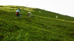 Ciclistas en la manera abajo en las montañas Imágenes de archivo libres de regalías