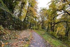 Ciclistas na estrada na floresta do outono com folhas caídas Foto de Stock