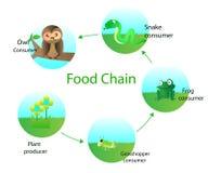 Ciclo alimentare Immagini Stock Libere da Diritti
