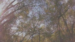 Ciclo d'ondeggiamento degli alberi video d archivio