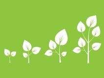 Ciclo de crecimiento del manzano Foto de archivo libre de regalías