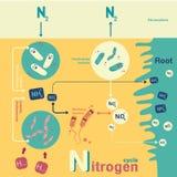 Ciclo de nitrogênio ilustração do vetor