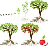 Ciclo de vida da árvore de maçã Fotografia de Stock Royalty Free