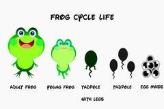 Ciclo de vida da rã, estilo dos desenhos animados, vetor da vida de animais ilustração do vetor