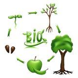 Ciclo de vida de Apple e bio sinal ilustração stock