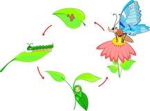 Ciclo de vida de la mariposa Imágenes de archivo libres de regalías