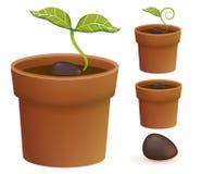 Ciclo de vida de la planta libre illustration
