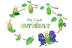 Ciclo de vida de una mariposa Foto de archivo