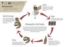 Ciclo de vida del mosquito stock de ilustración