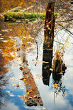 Ciclo de vida en el ecosistema del bosque Bosque abandonado, inundado Imagen de archivo libre de regalías