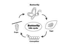 Ciclo de vida de la mariposa en el estilo del esquema, vector Imágenes de archivo libres de regalías
