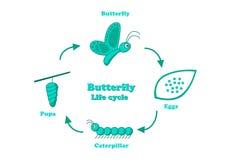 Ciclo de vida de la mariposa en el estilo monocromático, vector Fotos de archivo libres de regalías