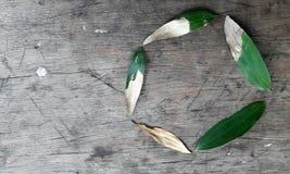 Ciclo de vida si una hoja del acacia contra un fondo de madera rústico Imagen de archivo libre de regalías
