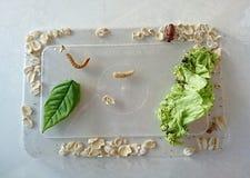 Ciclo de vida de un insecto Imagenes de archivo