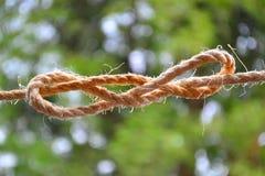 Ciclo del nodo di un filo spesso Immagine Stock